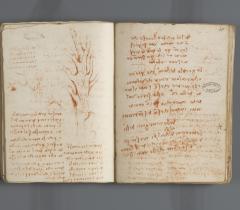 Botanique. Carnet G, ms 2178, f. 34v/35r © Bibliothèque de l'Institut de France